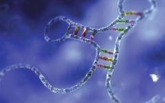 الصورة: الصورة: تطوير تكنولوجيا لتشفير الحمض النووي