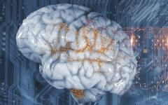 الصورة: الصورة: مهن تؤثر في العمليات الفيزيولوجية بالدماغ