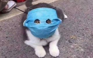 الصورة: الصورة: إصابة قط بفيروس كورونا في هونغ كونغ