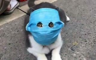 الصورة: الصورة: دراسة جديدة تؤكد أن القطط تصاب بكورونا ومنظمة الصحة تتحقق