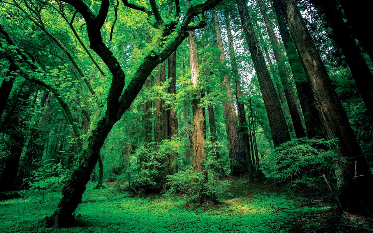 غابات في «الأمازون المطيرة» تحت الحجر