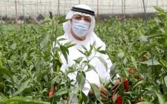 الصورة: الصورة: لواء متقاعد يجود بإنتاجه الزراعي للجهات الخيرية