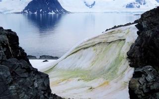 الصورة: الصورة: الثلج الأخضر يظهر في أنتاركتيكا في مشهد نادر