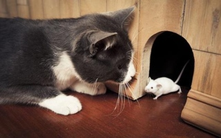 الصورة: الصورة: القطط والفئران.. لماذا هذا العداء؟