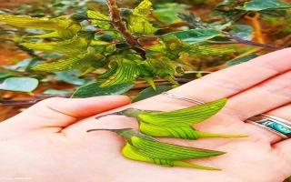 الصورة: الصورة: زهرة الطير الأخضر