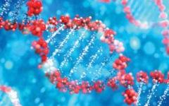 """الصورة: الصورة: الصين تكشف """"جينوم"""" فيروس كورونا بكين"""
