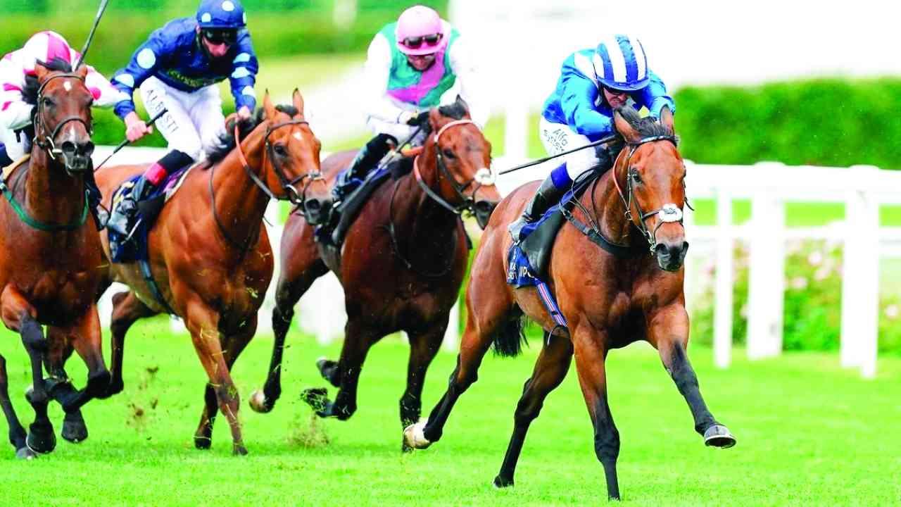 الصورة : خيول حمدان بن راشد آل مكتوم تواصل تميزها وانتصاراتها في المضامير العالمية  |   البيان