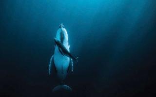 الصورة: الصورة: «الغارديان»: تضيء على روائع مسابقة «جائزة حمدان بن محمد للتصوير»
