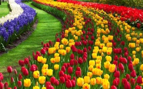 """الصورة: الصورة: صادرات الزهور الهولندية تنهار بسبب أزمة """"كورونا"""""""
