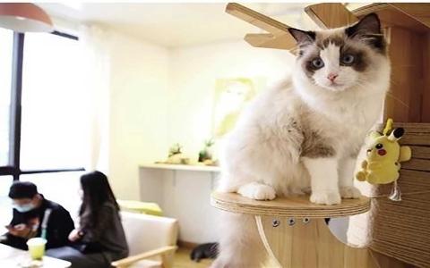 """الصورة: الصورة: رواج اقتصاد """"مقاهي الحيوانات الأليفة"""" في الصين"""