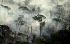 الصورة: الصورة: بالفيديو.. الأمازون تشهد أسوأ حرائق غابات منذ 13 عاماً