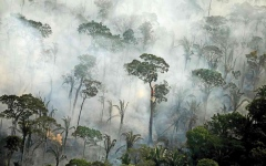 الصورة: الصورة: الأمازون تشهد أسوأ موجة حرائق منذ 13عاماً