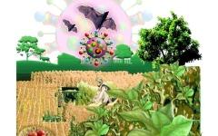 الصورة: الصورة: الحاجة إلى برنامج زراعة عالمي مغاير بعد الجائحة