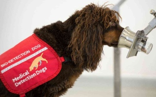 الصورة: الصورة: ألمانيا تدرب الكلاب على اكتشاف المصابين بكورونا