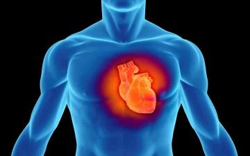 الصورة: الصورة: فيروس كورونا يصيب القلب أيضاً