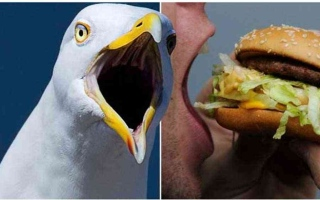 الصورة: الصورة: بريطاني يهجم على طائر ويعضه لأنه خطف شطيرته