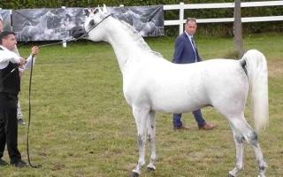 الصورة: الصورة: «مربط عجمان» يتألق في «إيلران لجمال الخيول»