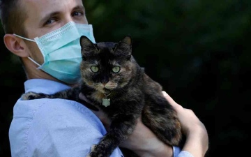"""الصورة: الصورة: دراسة: الإنسان يُعدي القطط والكلاب بـ""""كورونا"""""""