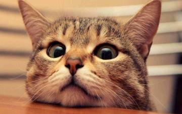 الصورة: الصورة: قطة متورطة في تهريب المخدرات