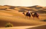 الصورة: الصورة: سفاري دبي يتقدم المواقع الأولى لأفضل تجارب العالم