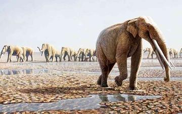 الصورة: الصورة: الانقراض يهدد الحيوانات العاشبة أكثر من المفترسة