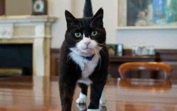 الصورة: الصورة: قط الخارجية البريطانية يتقاعد وينتقل إلى الريف