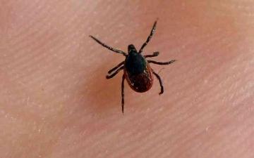 الصورة: الصورة: يتسبب في وفاة 7 أشخاص.. فيروس جديد يضرب الصين