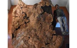 الصورة: الصورة: أكبر سلحفاة عاشت في كوكبنا