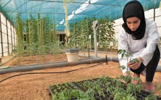 الصورة: الصورة: بيئة مستدامة للزراعة المحلية