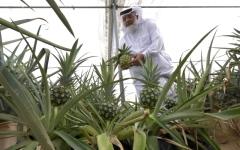 الصورة: الصورة: ثورة زراعية في صحراء دبي