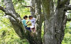 الصورة: الصورة: في السلفادور.. الدراسة في أعالي الأشجار والتلال!