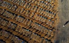 الصورة: الصورة: أكثر من 25 ألف مصاب بكورونا في أستراليا والبرازيل تسجل 16158 إصابة جديدة