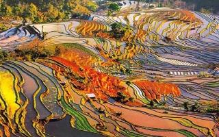 الصورة: الصورة: شاهد.. مناظر حقول هاني المذهلة
