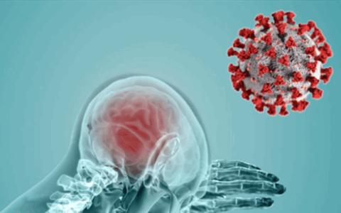 الصورة: الصورة: دراسة: فيروس كورونا قادر على التكاثر داخل الدماغ