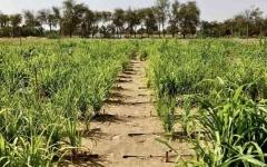 الصورة: الصورة: «بي بي سي»:  الطين النانوي يحول صحراء دبي إلى أرض زراعية