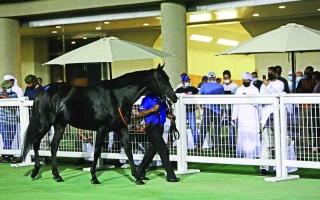 الصورة: الصورة: عودة الحياة إلى مزادات الخيول في الإمارات