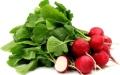 الصورة: الصورة: الفجل الأحمر..  غني بالمعادن والفيتامينات