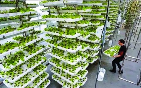 الصورة: الصورة: مزرعة عمودية في البرازيل تقدم حلولاً مبتكرة