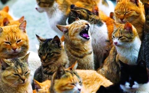 الصورة: الصورة: البحث عن مأوى لـ  110 قطط