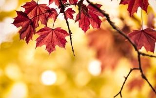الصورة: الصورة: اليوم آخر أيام الصيف وبداية الخريف غدا