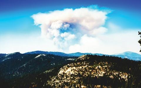 الصورة: الصورة: تطوير أداة لرسم كل شجرة في غابات كاليفورنيا تحسبا للحرائق