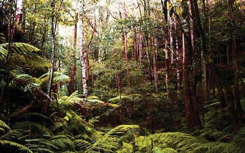 الصورة: الصورة: السرخس القديم قدم الديناصورات رمز للتعافي من حرائق الغابات