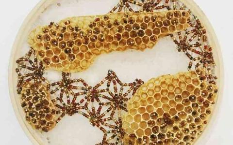 الصورة: الصورة: تحفٌ من الطبيعة مغلّفة بشمع العسل