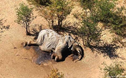 الصورة: الصورة: هذا هو سبب النفوق الجماعي لفيلة بوتسوانا!