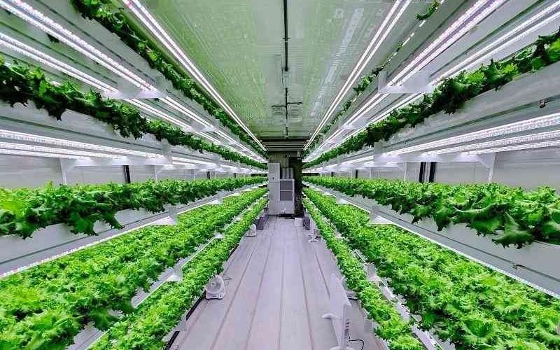 الصورة: الصورة: مشروع إماراتي هولندي لإنتاج 10 آلاف طن من المزروعات