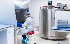 الصورة: الصورة: الإمارات تسجل تميزاً عالمياً في استخدام الخلايا الجذعية