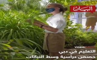 الصورة: الصورة: حصص دراسية وسط النباتات