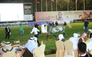 الصورة: الصورة: مزاد جمعية الإمارات للخيول العربية اليوم
