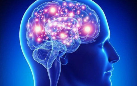 الصورة: الصورة: مكمّل غذائي للدماغ يحسن الذاكرة اللفظية