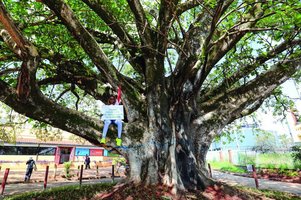 الصورة : Kenyan environmental activist Phyllis Wamaitha holds a placard as she sits atop a fig tree during a protest to save the iconic, century-old tree from being cut down to pave way for a Chinese-funded highway, in Westlands district of Nairobi, Kenya November 11, 2020. REUTERS/Thomas Mukoya